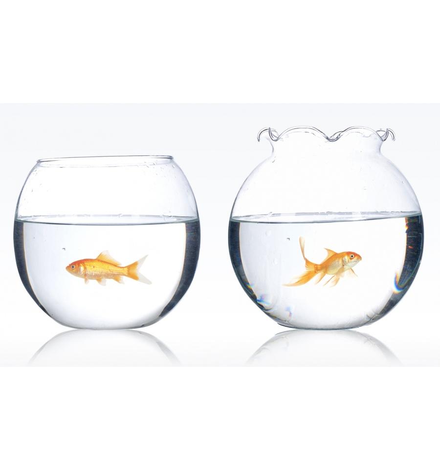 Flamingo glass fish bowl for Fish bowl glass