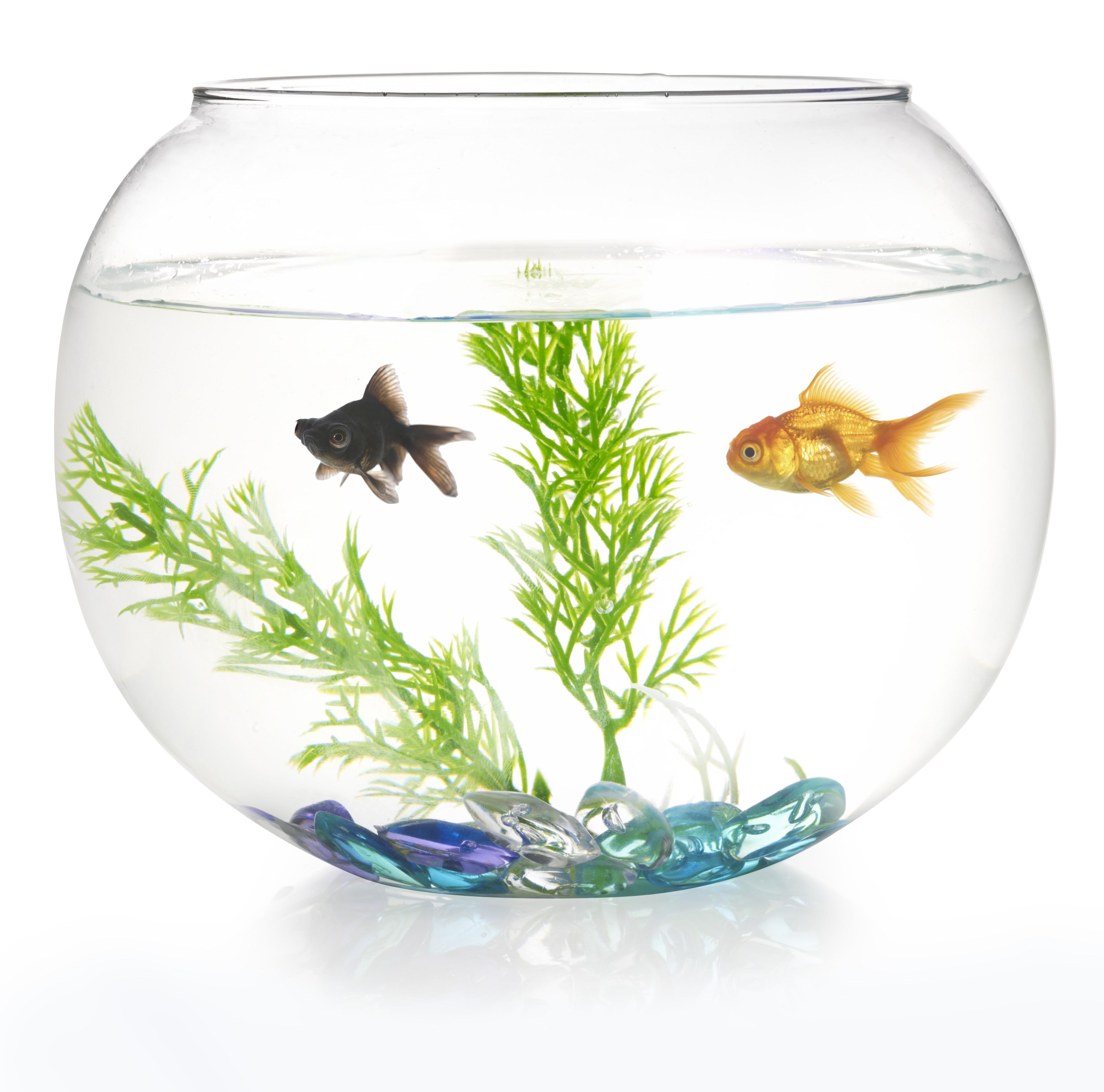 Fish bowl girl video — photo 2