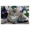 54 Mini - Cute pets