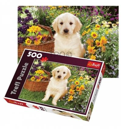 500 - Puppy labrador in the garden [371604]