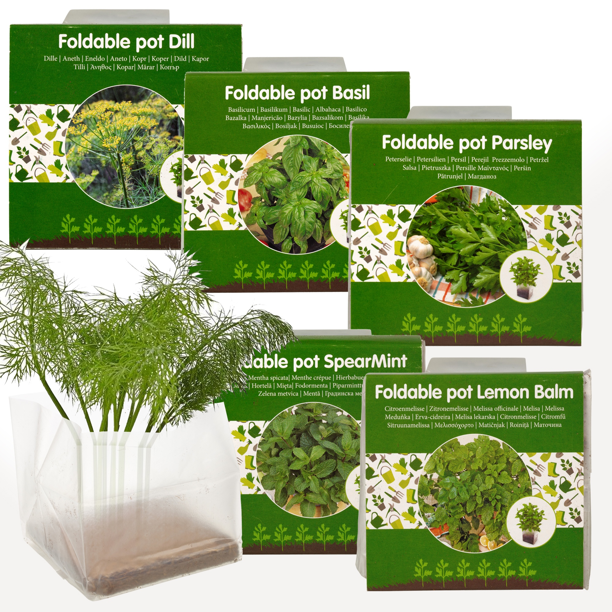 Planter Menthe En Pot details about 5 herbs seeds grow your own veg indoor kit plant pot garden  greenhouse plant set