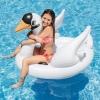 Swan Ride [403014]