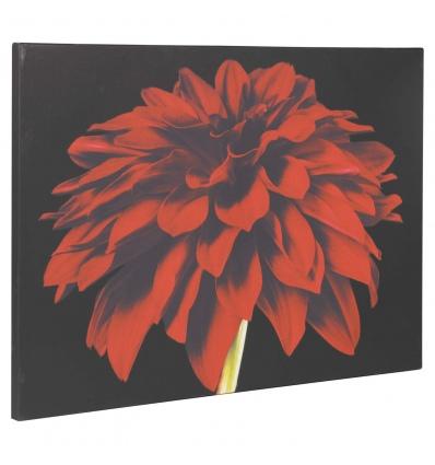 Red Dahlia Canvas [068269]