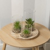 Plant And Jar Display Stand [584374]